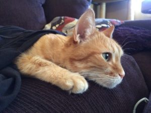 An orange cat laying on a pillow, her face and front paw sticking out from under a blanket.